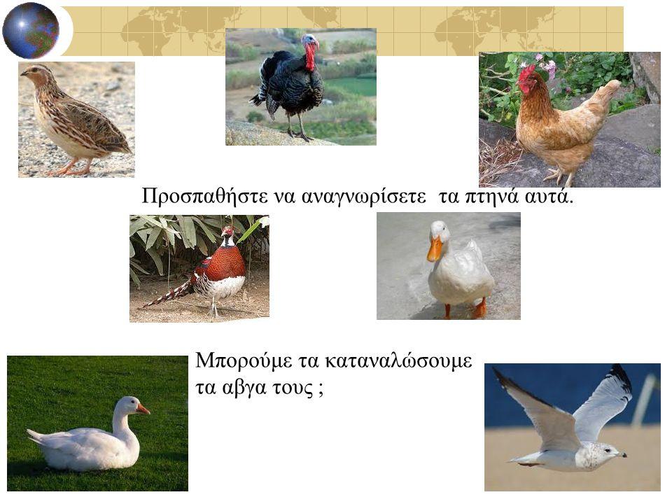 Προσπαθήστε να αναγνωρίσετε τα πτηνά αυτά.