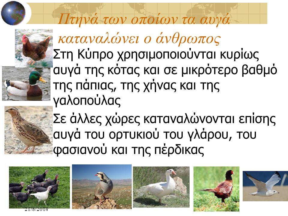Πτηνά των οποίων τα αυγά καταναλώνει ο άνθρωπος