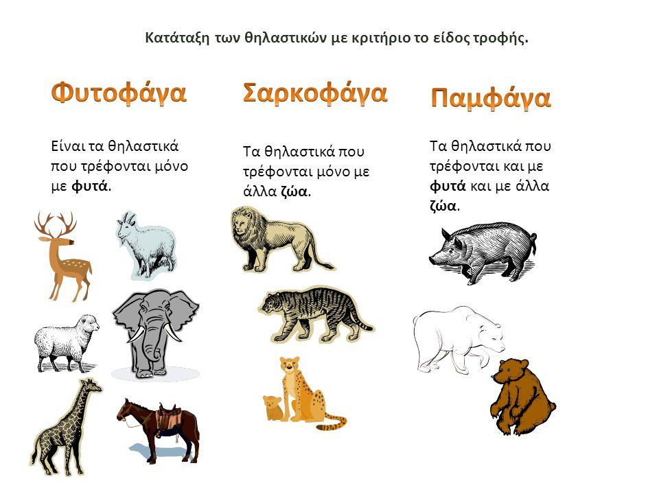 Κατάταξη των θηλαστικών με κριτήριο το είδος τροφής.
