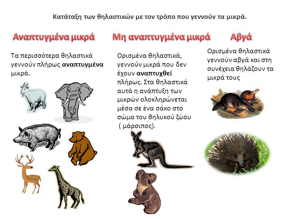 Κατάταξη των θηλαστικών με τον τρόπο που γεννούν τα μικρά.