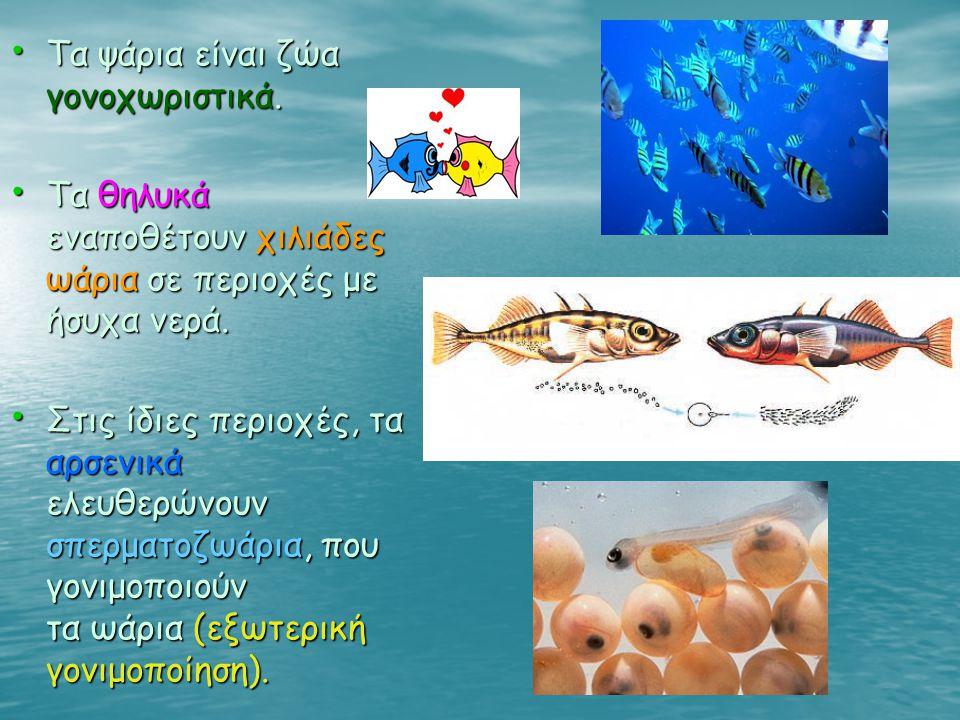 Τα ψάρια είναι ζώα γονοχωριστικά.