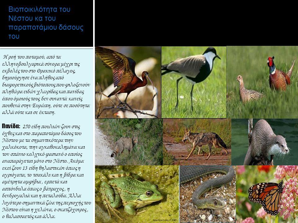 Βιοποικιλότητα του Νέστου κα του παραποτάμιου δάσους του