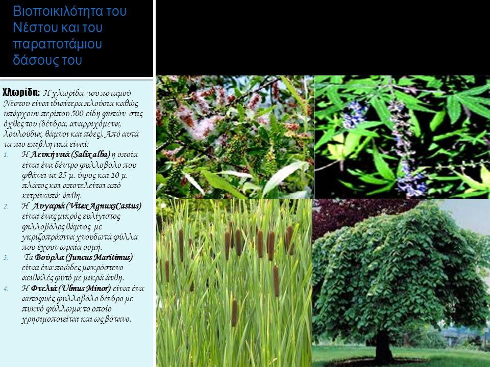 Βιοποικιλότητα του Νέστου και του παραποτάμιου δάσους του