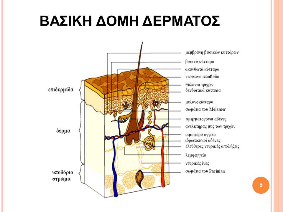 ΒαΣικη δομη δερματοΣ
