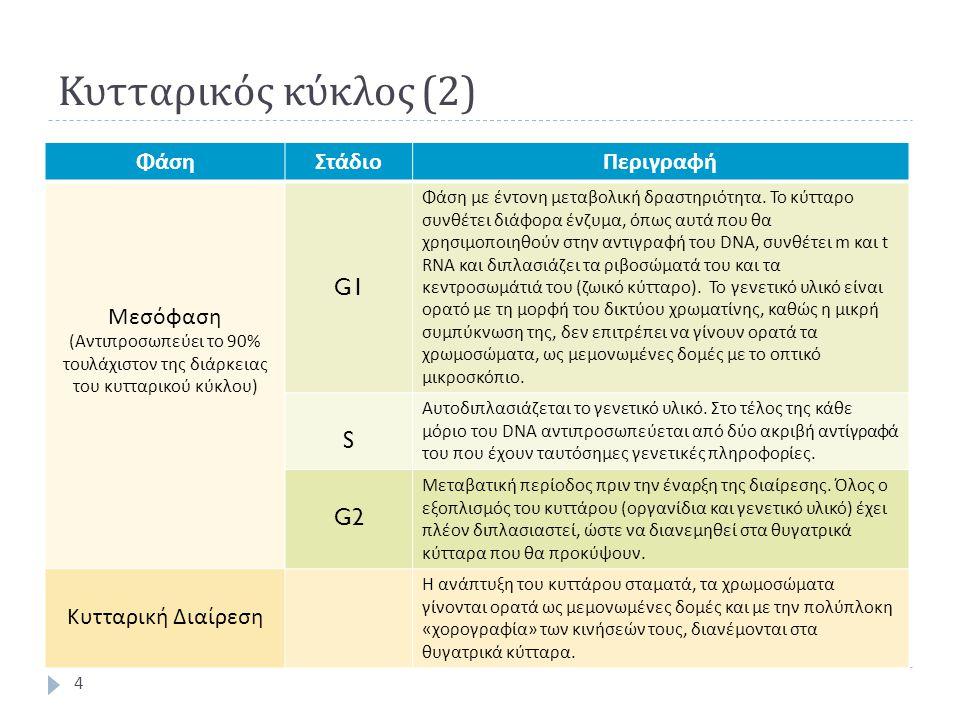 Κυτταρικός κύκλος (2) Φάση Στάδιο Περιγραφή Μεσόφαση G1 S G2