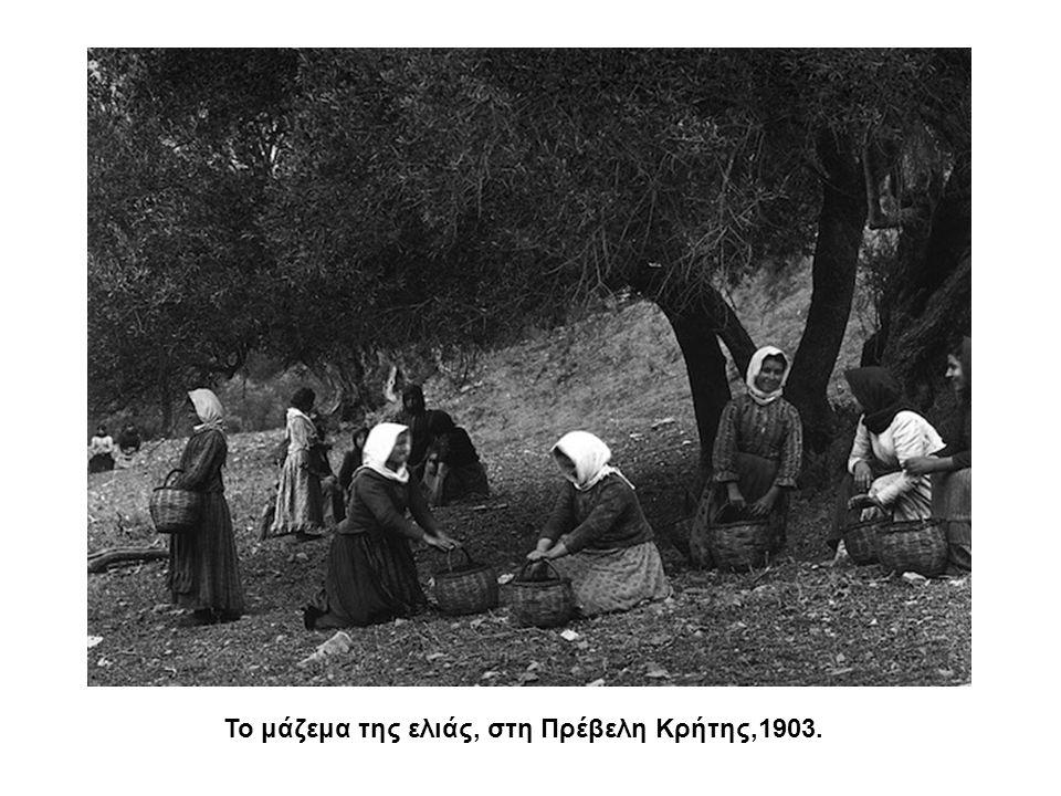 Το μάζεμα της ελιάς, στη Πρέβελη Κρήτης,1903.