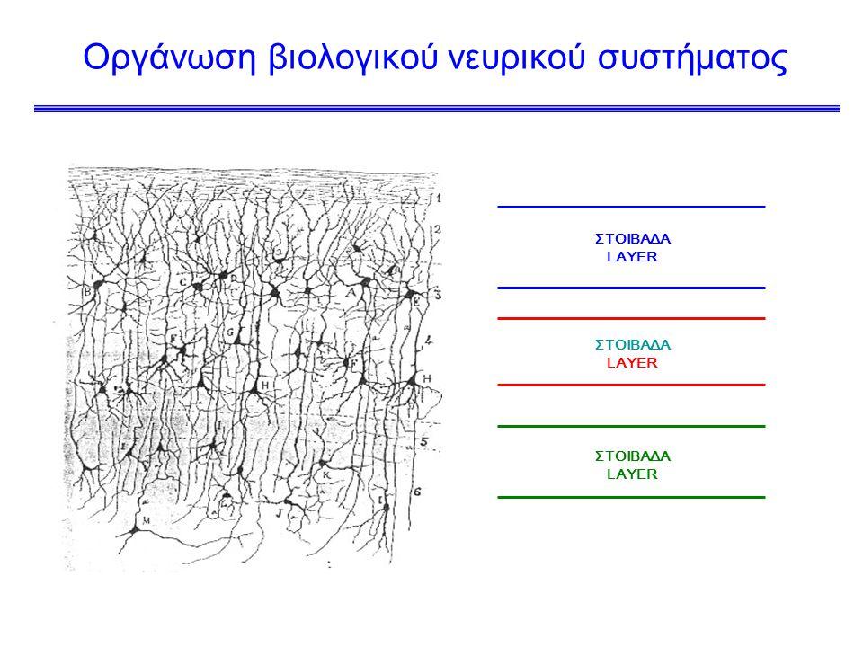 Οργάνωση βιολογικού νευρικού συστήματος