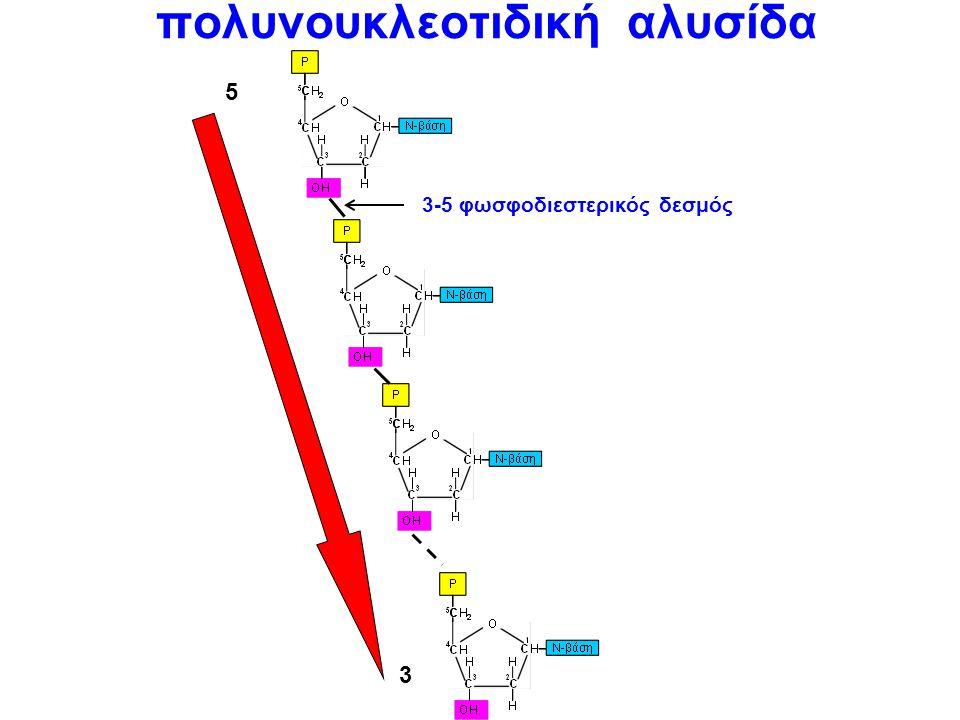 πολυνουκλεοτιδική αλυσίδα
