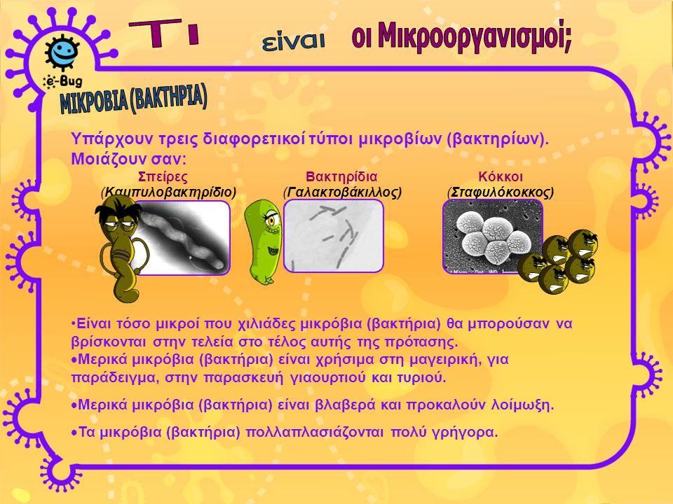 οι Μικροοργανισμοί; ΜΙΚΡΟΒΙΑ (ΒΑΚΤΗΡΙΑ)