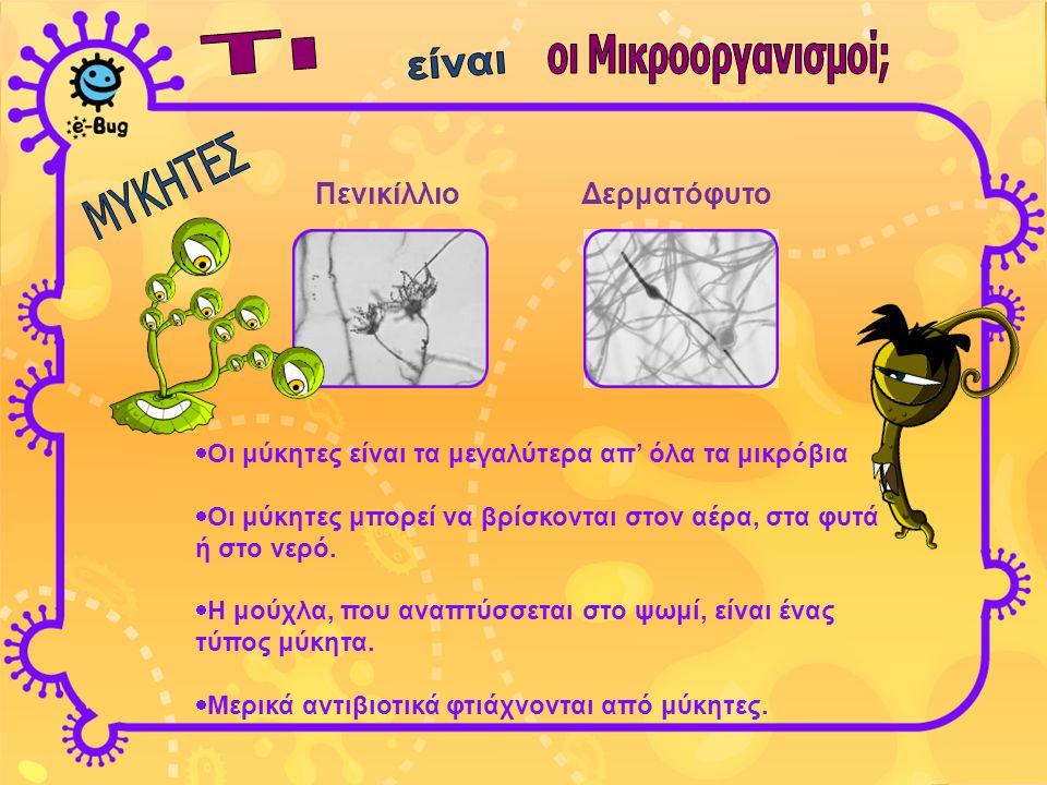 Πενικίλλιο Δερματόφυτο