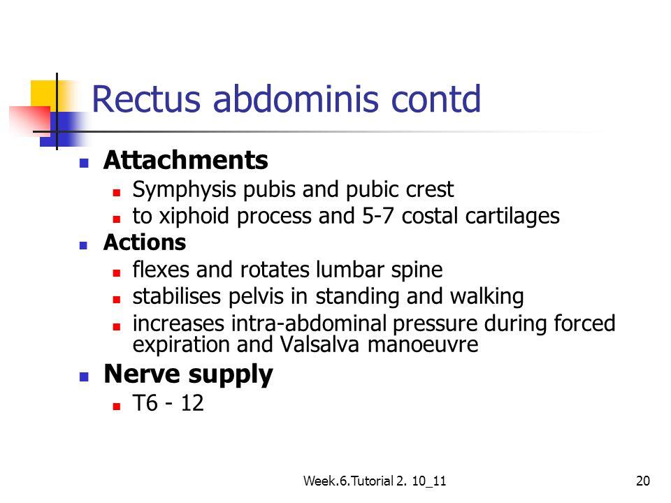 Rectus abdominis contd