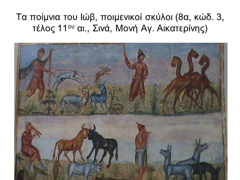 Τα ποίμνια του Ιώβ, ποιμενικοί σκύλοι (8α, κώδ. 3, τέλος 11ου αι