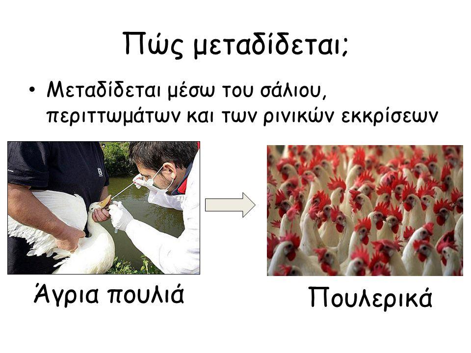 Πώς μεταδίδεται; Άγρια πουλιά Πουλερικά