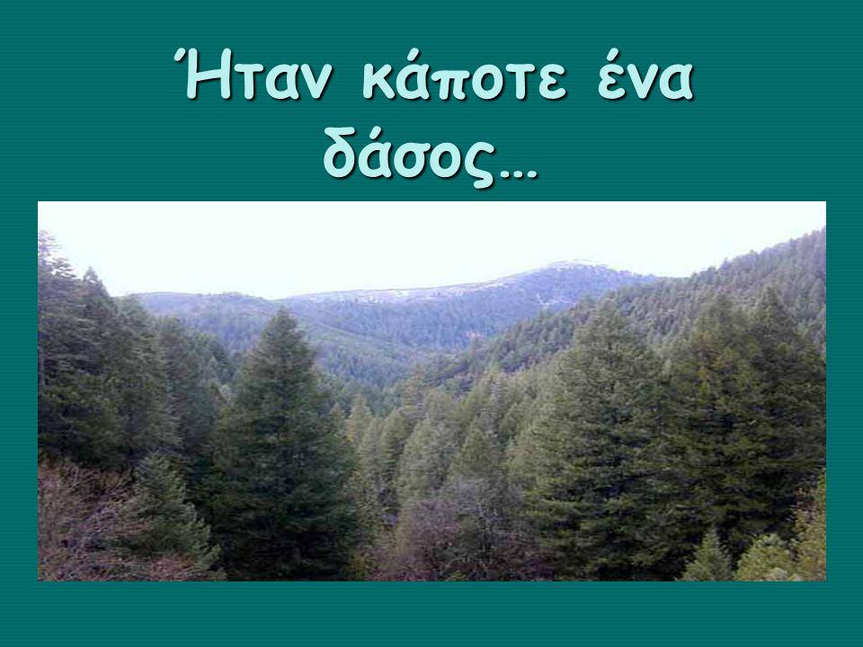 Ήταν κάποτε ένα δάσος…