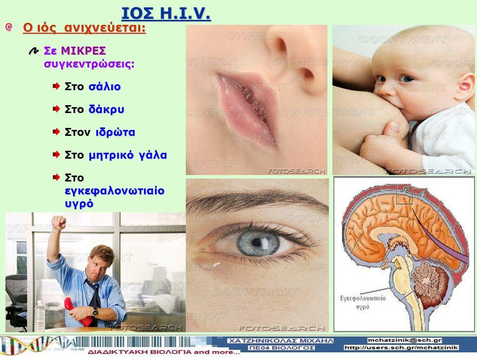 IOΣ H.I.V. Ο ιός ανιχνεύεται: Σε ΜΙΚΡΕΣ συγκεντρώσεις: Στο σάλιο
