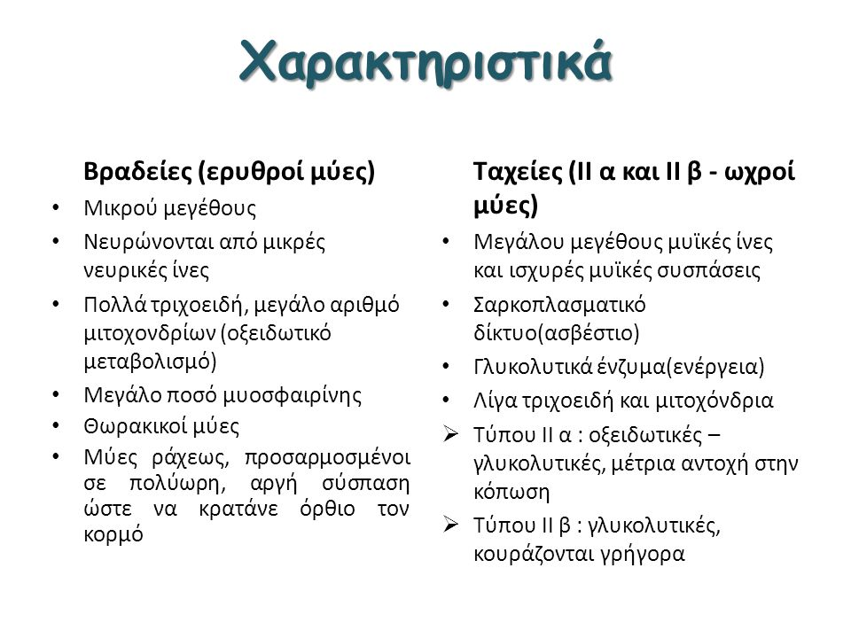 Χαρακτηριστικά Βραδείες (ερυθροί μύες)