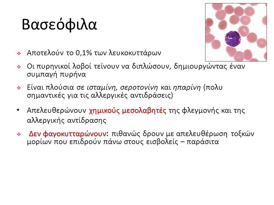 Βασεόφιλα Αποτελούν το 0,1% των λευκοκυττάρων