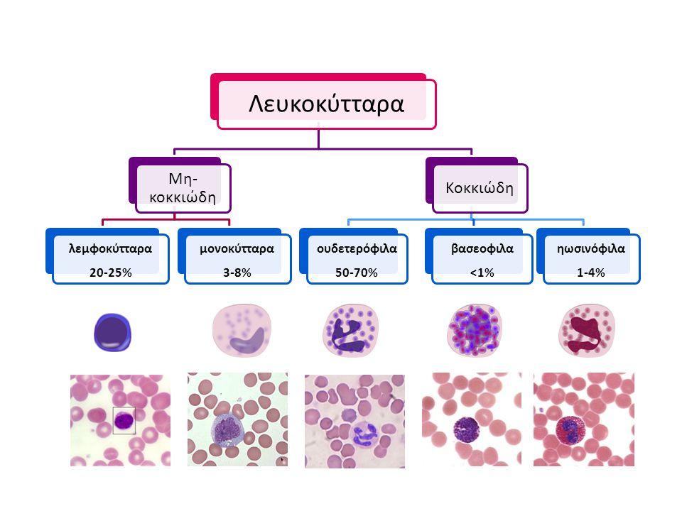 Λευκοκύτταρα Μη-κοκκιώδη Κοκκιώδη λεμφοκύτταρα 20-25% μονοκύτταρα 3-8%