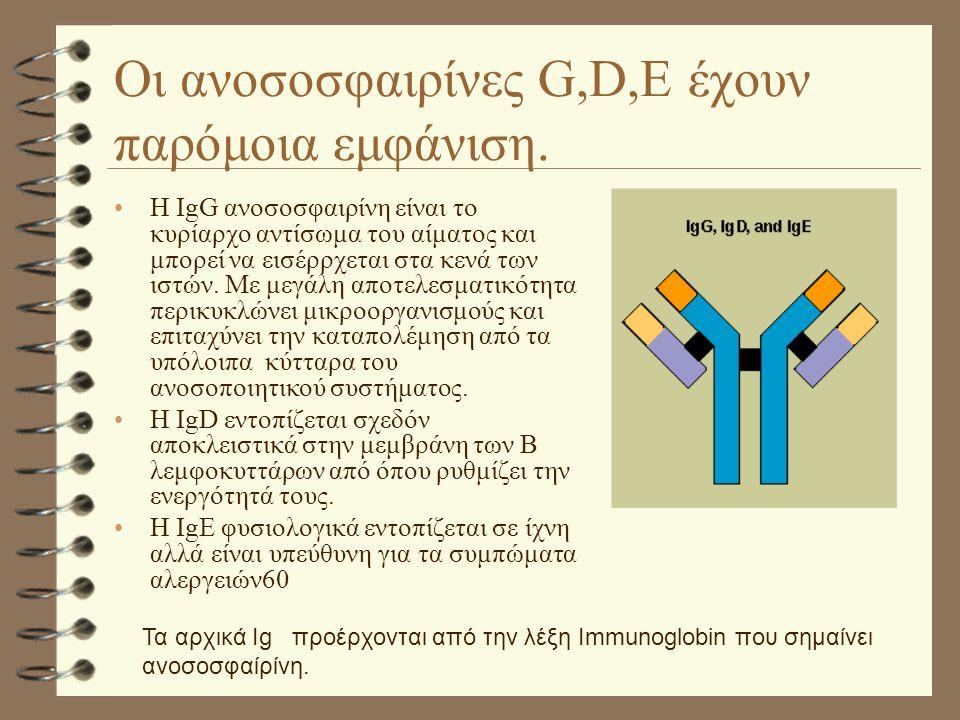 Οι ανοσοσφαιρίνες G,D,E έχουν παρόμοια εμφάνιση.