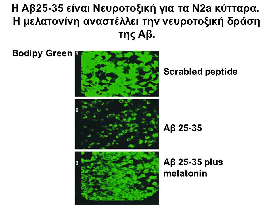 Η Αβ25-35 είναι Νευροτοξική για τα N2a κύτταρα.