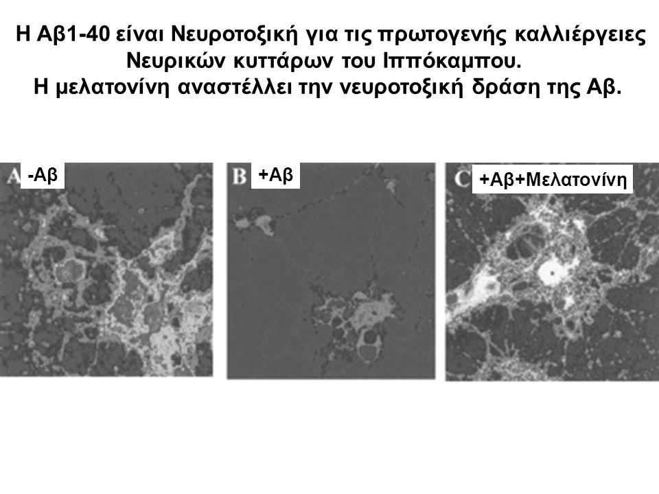 Η Αβ1-40 είναι Νευροτοξική για τις πρωτoγενής καλλιέργειες