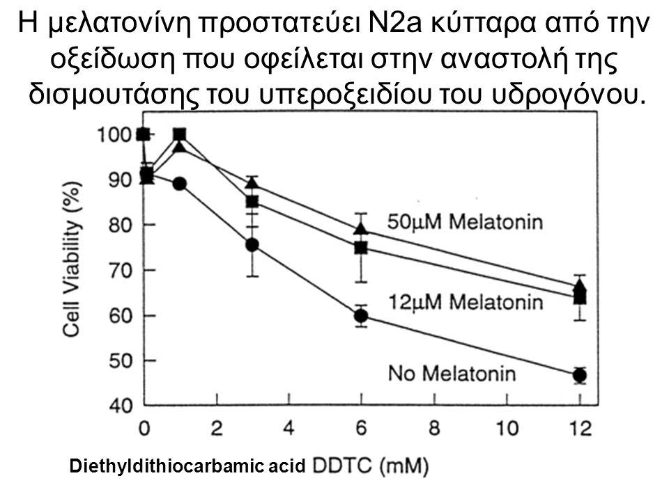 Η μελατονίνη προστατεύει N2a κύτταρα από την