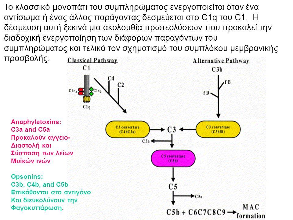 Το κλασσικό μονοπάτι του συμπληρώματος ενεργοποιείται όταν ένα αντίσωμα ή ένας άλλος παράγοντας δεσμεύεται στο C1q του C1. Η δέσμευση αυτή ξεκινά μια ακολουθία πρωτεολύσεων που προκαλεί την διαδοχική ενεργοποίηση των διάφορων παραγόντων του συμπληρώματος και τελικά τον σχηματισμό του συμπλόκου μεμβρανικής προσβολής.