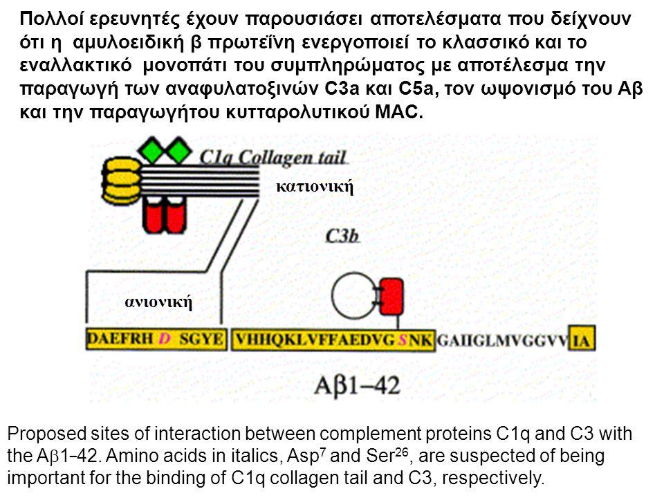 Πολλοί ερευνητές έχουν παρουσιάσει αποτελέσματα που δείχνουν ότι η αμυλοειδική β πρωτεΐνη ενεργοποιεί το κλασσικό και το εναλλακτικό μονοπάτι του συμπληρώματος με αποτέλεσμα την παραγωγή των αναφυλατοξινών C3a και C5a, τον ωψονισμό του Αβ και την παραγωγήτου κυτταρολυτικού MAC.