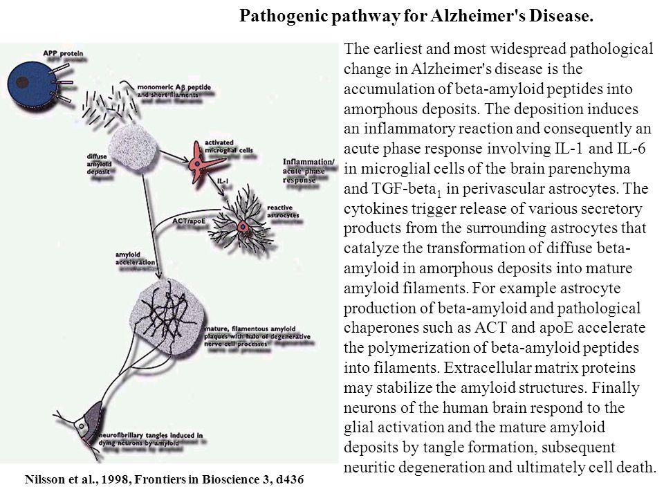 Pathogenic pathway for Alzheimer s Disease.