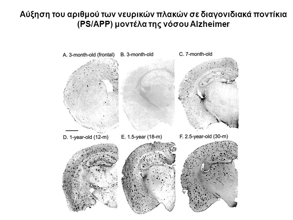 Αύξηση του αριθμού των νευρικών πλακών σε διαγονιδιακά ποντίκια