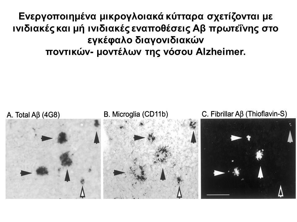 ποντικών- μοντέλων της νόσου Alzheimer.