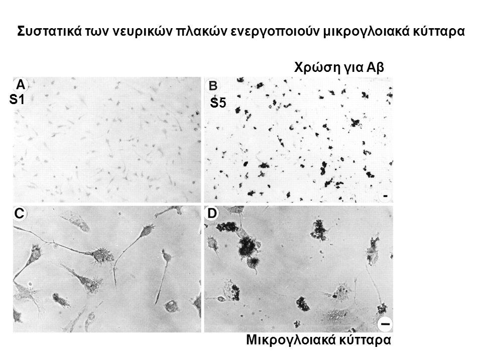 Συστατικά των νευρικών πλακών ενεργοποιούν μικρογλοιακά κύτταρα