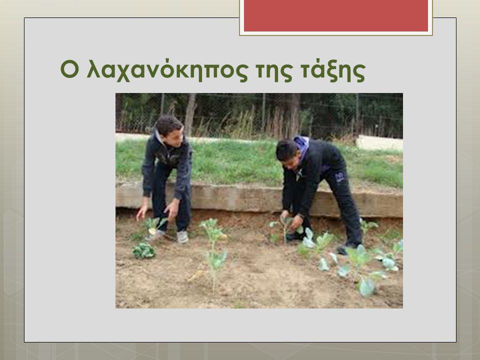 Ο λαχανόκηπος της τάξης