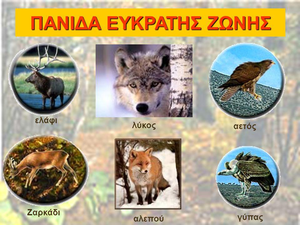ΠΑΝΙΔΑ ΕΥΚΡΑΤΗΣ ΖΩΝΗΣ ελάφι λύκος αετός Ζαρκάδι αλεπού γύπας