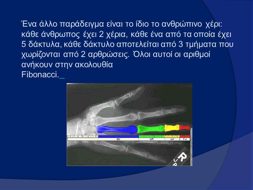Ένα άλλο παράδειγμα είναι το ίδιο το ανθρώπινο χέρι: κάθε άνθρωπος έχει 2 χέρια, κάθε ένα από τα οποία έχει 5 δάκτυλα, κάθε δάκτυλο αποτελείται από 3 τμήματα που χωρίζονται από 2 αρθρώσεις.