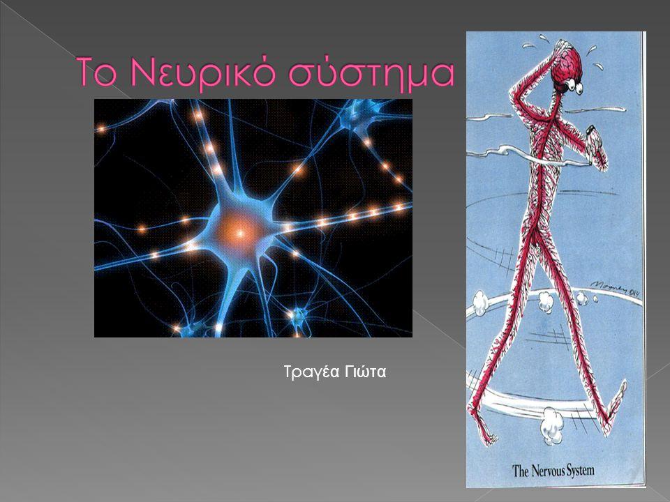 Το Νευρικό σύστημα Τραγέα Γιώτα