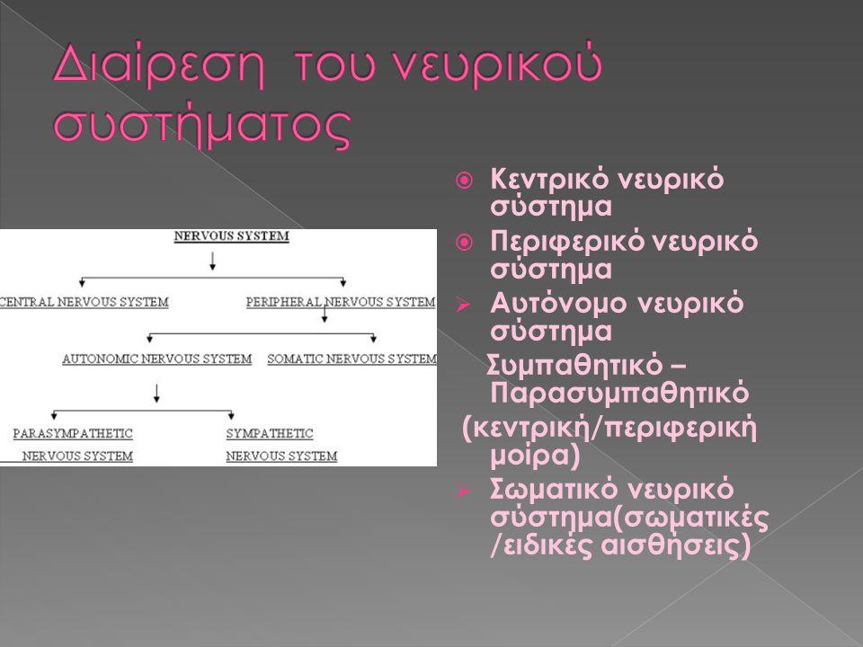 Διαίρεση του νευρικού συστήματος
