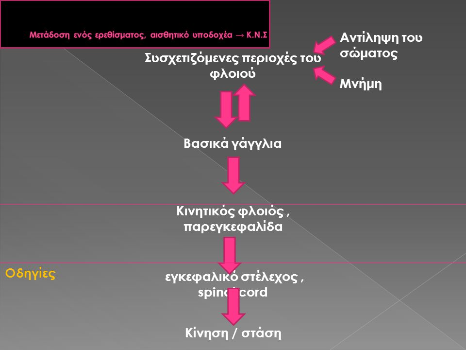 Μετάδοση ενός ερεθίσματος, αισθητικό υποδοχέα → Κ.Ν.Σ