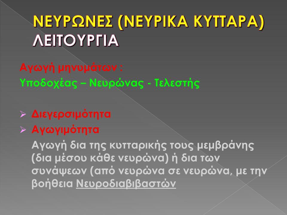 ΝΕΥΡΩΝΕΣ (ΝΕΥΡΙΚΑ ΚΥΤΤΑΡΑ) ΛΕΙΤΟΥΡΓΙΑ