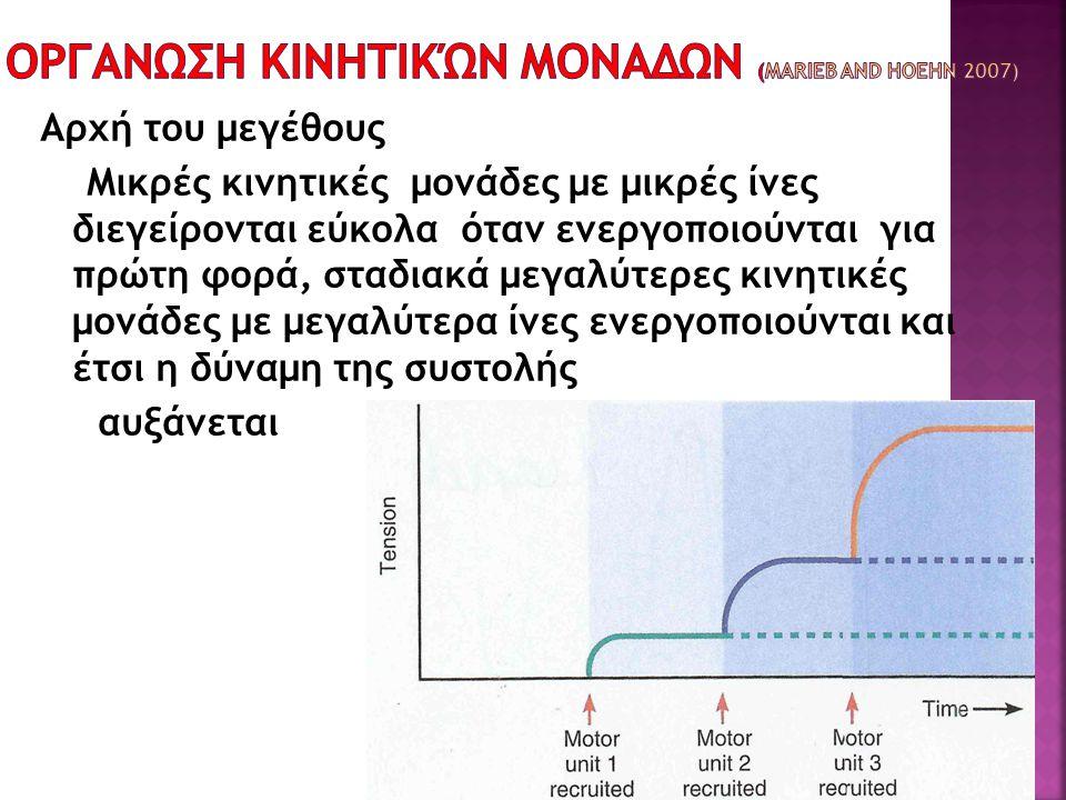 Οργανωση κινητικών μοναδων (Marieb and Hoehn 2007)
