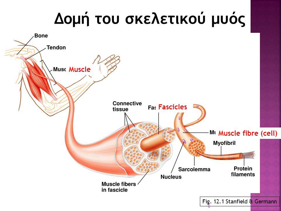 Δομή του σκελετικού μυός