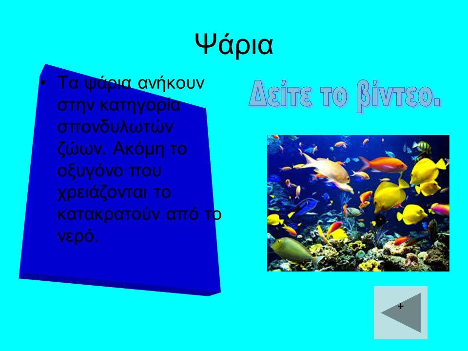 Ψάρια Τα ψάρια ανήκουν στην κατηγορία σπονδυλωτών ζώων. Ακόμη το οξυγόνο που χρειάζονται το κατακρατούν από το νερό.