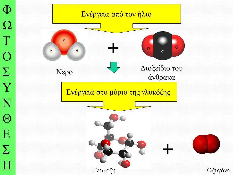 Ενέργεια στο μόριο της γλυκόζης