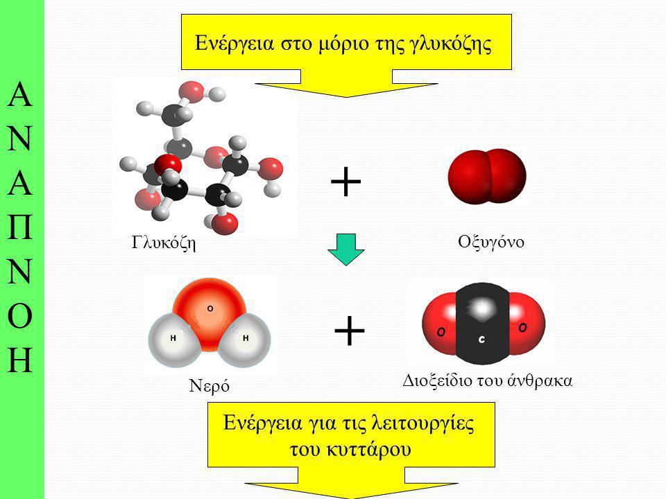 + + ΑΝΑΠΝΟΗ Ενέργεια στο μόριο της γλυκόζης