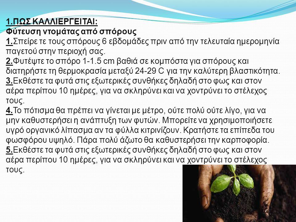 1. ΠΩΣ ΚΑΛΛΙΕΡΓΕΙΤΑΙ: Φύτευση ντομάτας από σπόρους 1
