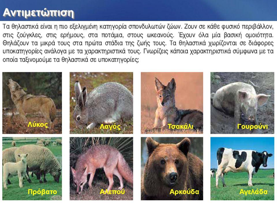 Αντιμετώπιση Λύκος Λαγός Τσακάλι Γουρούνι Πρόβατο Αλεπού Αρκούδα