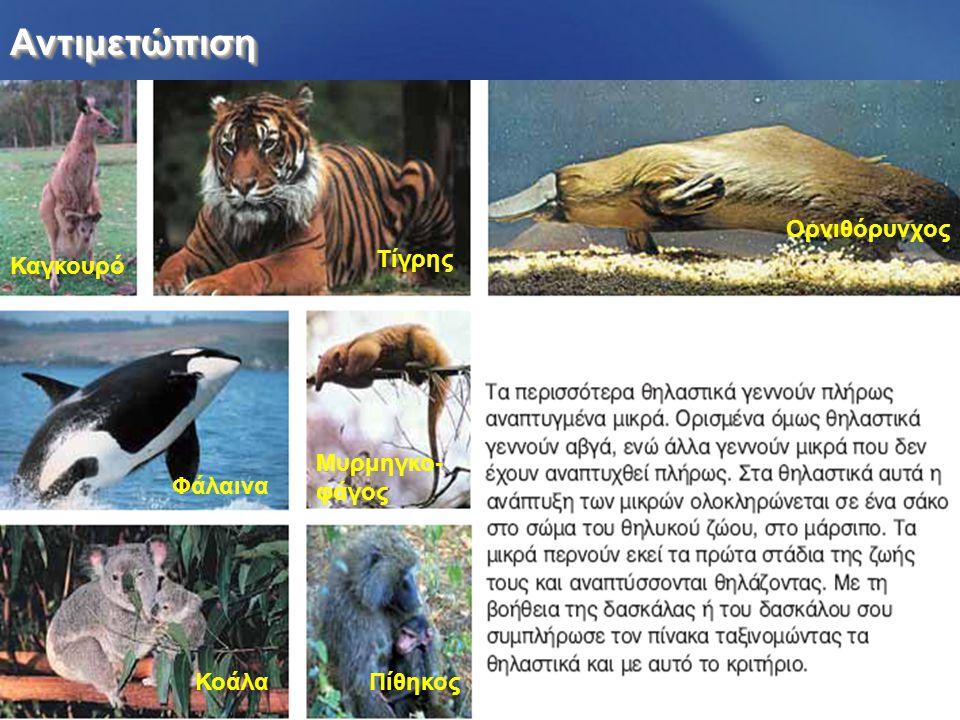 Αντιμετώπιση Ορνιθόρυνχος Τίγρης Καγκουρό Μυρμηγκο- φάγος Φάλαινα