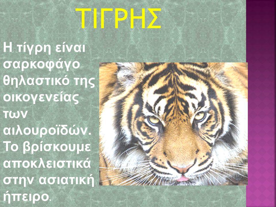 ΤΙΓΡΗΣ Η τίγρη είναι σαρκοφάγο θηλαστικό της οικογενείας των αιλουρoϊδών.