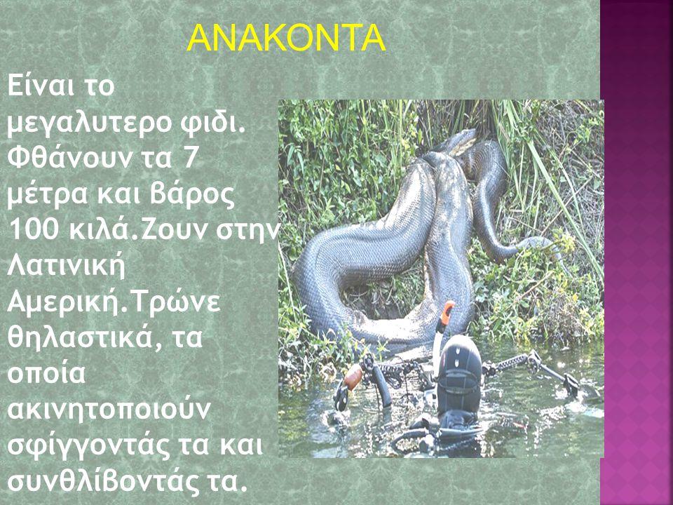 ΑΝΑΚΟΝΤΑ