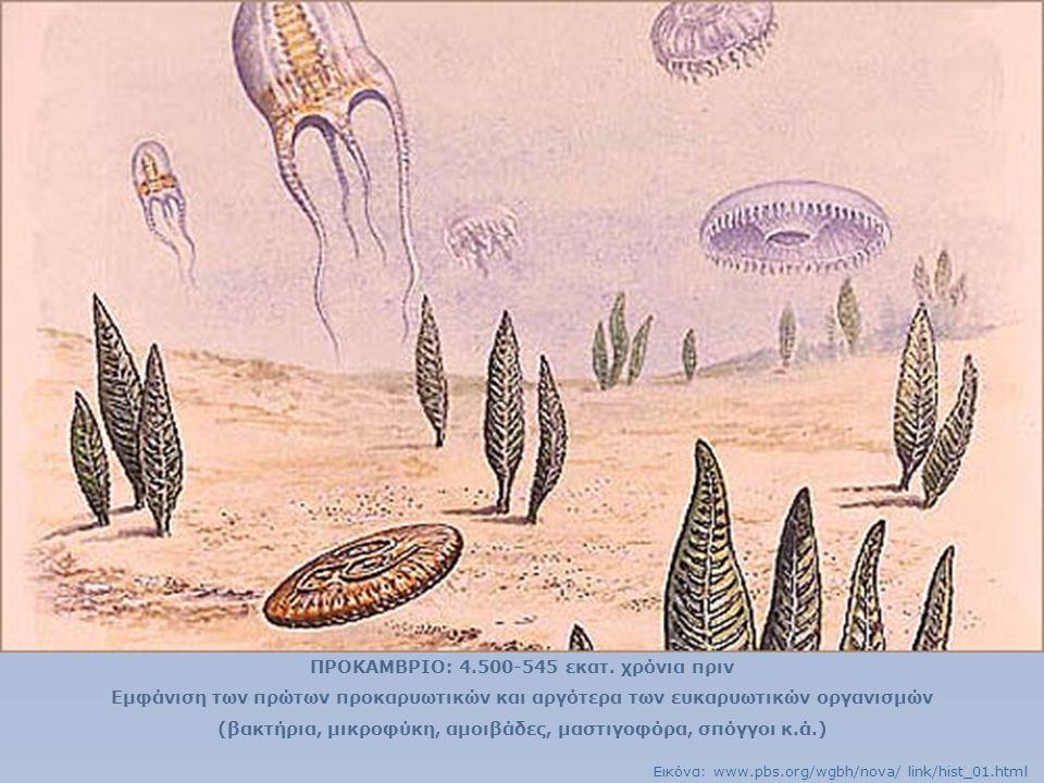 ΠΡΟΚΑΜΒΡΙΟ: 4.500-545 εκατ. χρόνια πριν